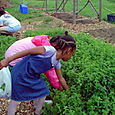 20. Girls picking herbs