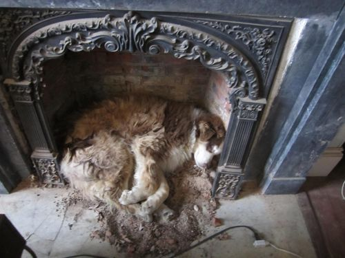 Cassie in fireplace