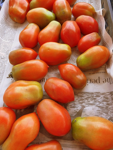 Tomatoes_krossbow