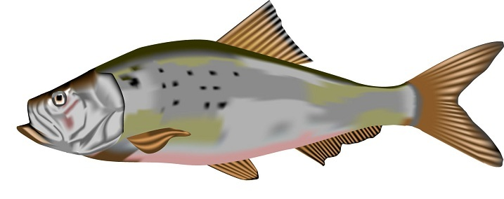 Menhaden_copy.jpg
