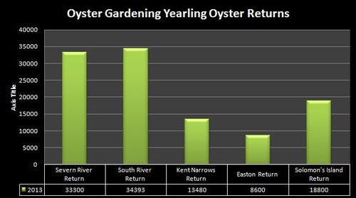 2013 Oyster Gardening Yearling Returns