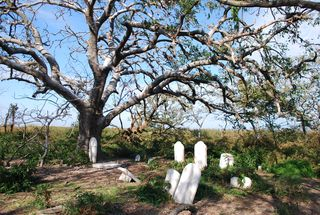 Graveyard on Holland Island