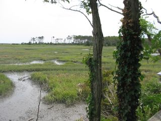 Marsh at Kiptopeke2