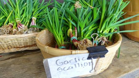 Garlic Scallions Clagett