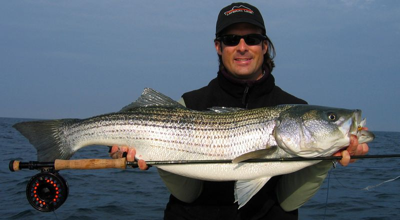 BrandonWhite_LatearlLine_StripedBass_flyrod