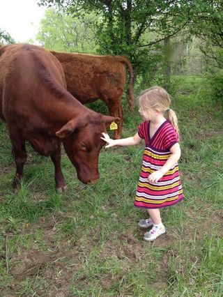 Jennifer Girl and Cow