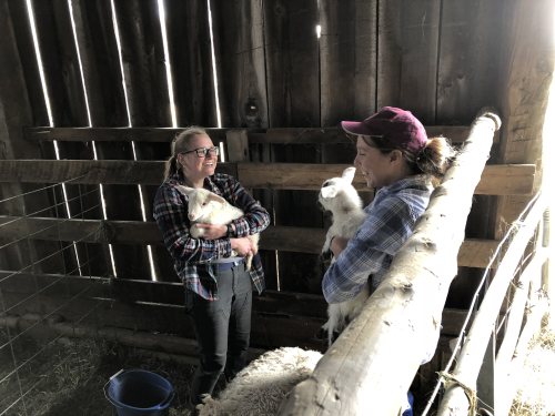 Holding baby lambs lwintherhansen
