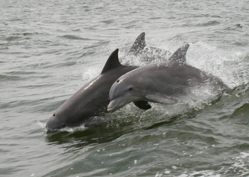 Dolphins-1200