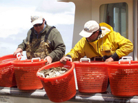 Photo: Building an oyster reef