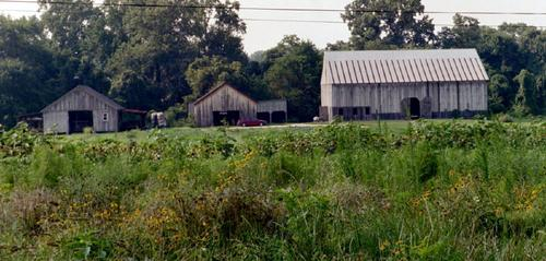 08. Some of our barns