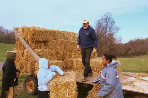 27. Ken Weiss and young volunteers unloading hay to mulch the strawberry field