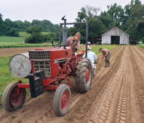 16. Transplanting brassicas -- Holly is on the hot seat