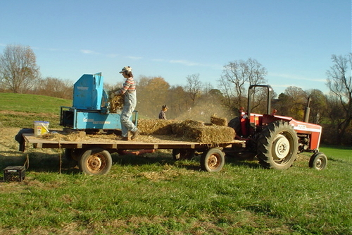 48. Mulching strawberries with the bale chopper